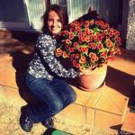 ¿Cuándo y cómo se podan los crisantemos?
