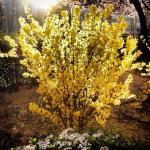 En jardinería, ¿Quién fue Beatrix Farrand?