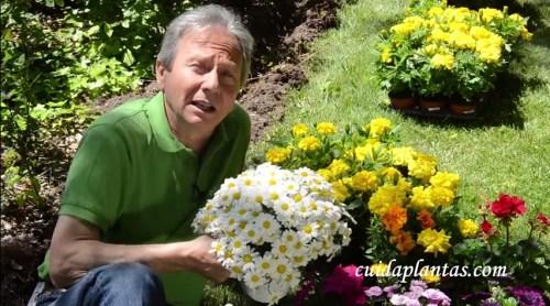 Plantar flores de jardín para disfrutar su color