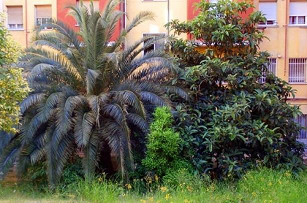 Decoración de patios en el Barrio de la Concepción
