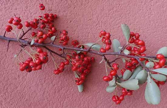 Decoraciones y manualidades navideñas