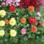 Plantar flores en el jardín