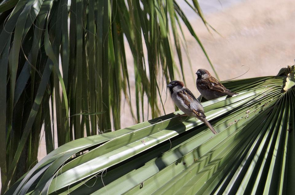 Doce días de confinamiento en Alcantarilla por pandemia de coronavirus