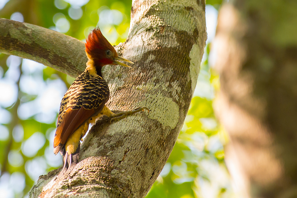 The Mysterious Bamboo Birds of Southeastern Peru