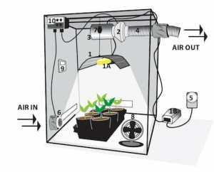 Coltivare peperoncini in una growbox