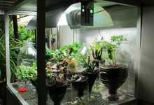 grow-box-peperoncini