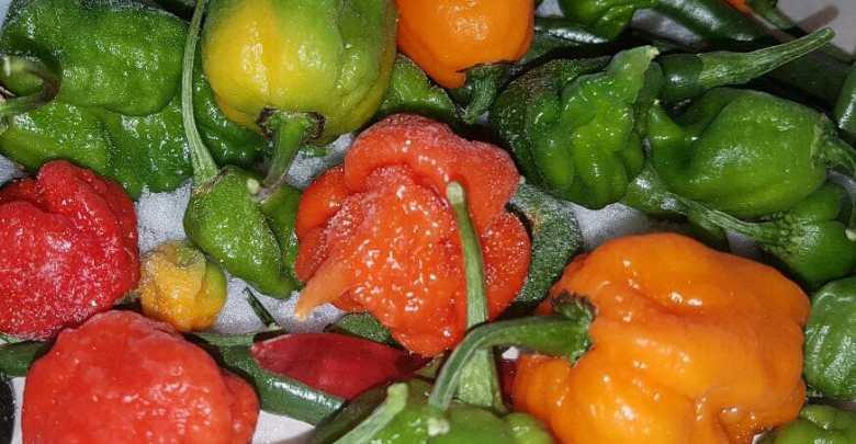 come conservare i peperoncini
