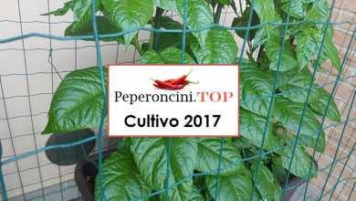 peperoncini piccanti balcone anno 2017