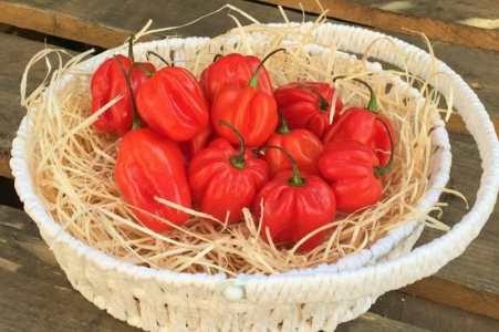 Fruttaweb: Peperoncino Habanero Red