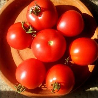 Tomate // Prune de Saint Pierre