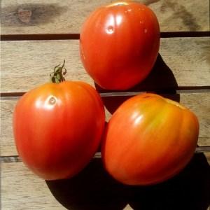 Tomate // Cœur de Bœuf Framboise