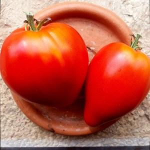 Tomate // Cœur Jory (Graines)