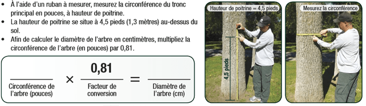Prise de mesure pour le traitement au TreeAzin