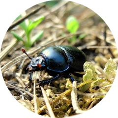 Conseils section insectes et maladies