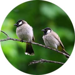 Conseils Section Oiseaux