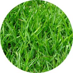 Conseils section pelouse