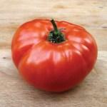 Tomates anciennes Manitoba
