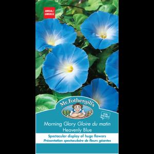 Gloire Du Matin Heavenly Blue – Mr. Fothergill's