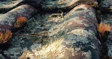 Rooftop moss