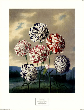 carnations-in-temple-of-flora