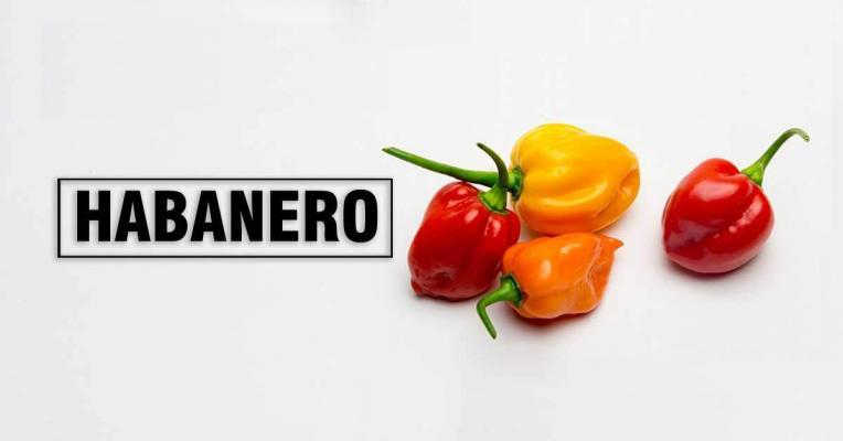 Habanero Pepper