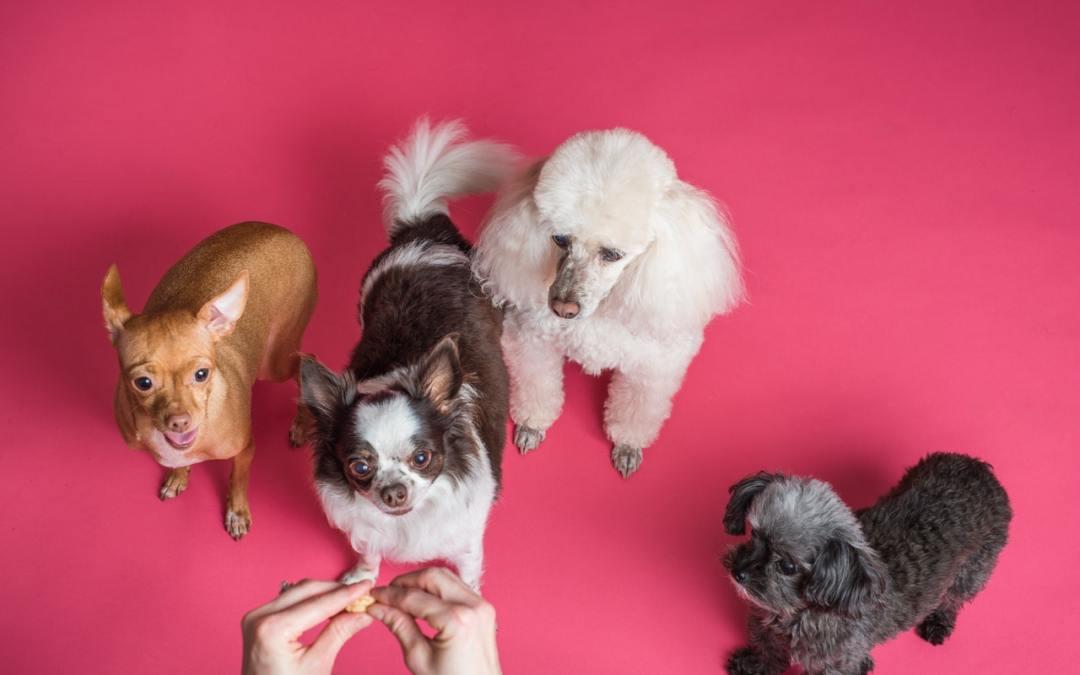 Tendances en petfood, petcare et santé animale