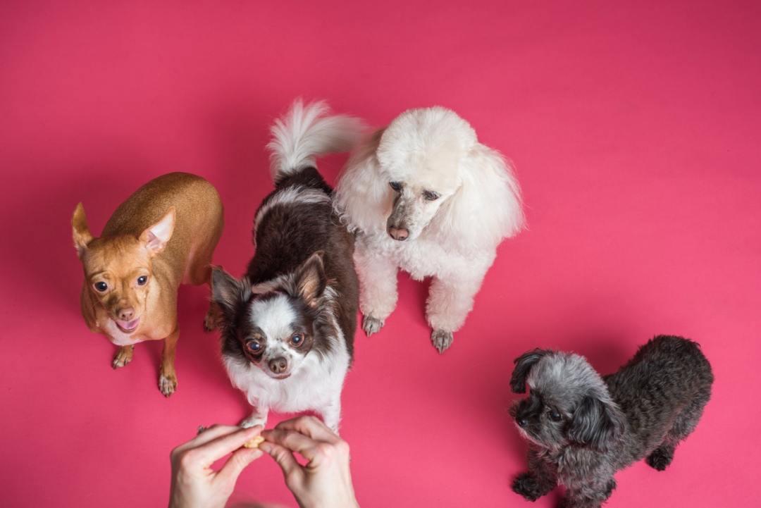 petfood_petcare_chien