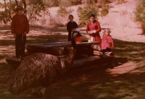 Lunch with the emus. Late 1970s.