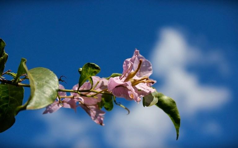 Em Flores