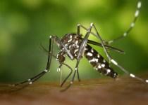 Demam dengue dan demam berdarah dengue