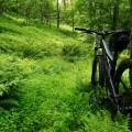 Ikke engang skoven er uden risiko for bivirkninger