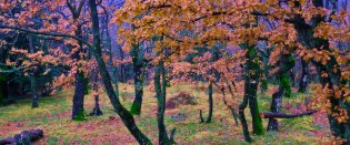 Dražen Lapić - Creska šuma