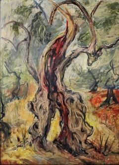 Cata Dujšin Ribar - Stara maslina, 1970., ulje na platnu; 67x48