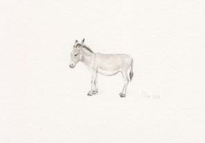 Mr. Donkey, 14x9 cm, akvarel, 2016.