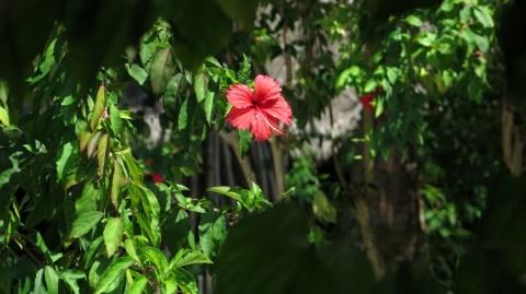 Ljepote prirode - unutrašnjost otoka