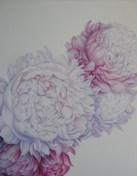 Božuri, studija 6 - ulje na platnu, 100x80cm, 2020