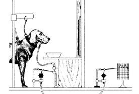 perro-pavlov