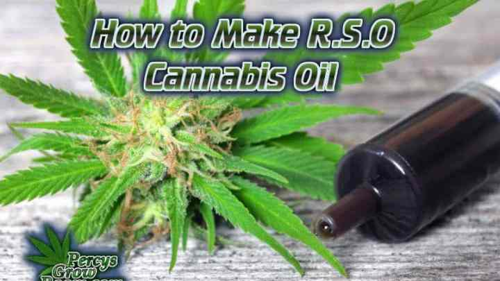 cannabis oil, medical cannabis oil, cannabis flower and a syringe, of medical cannabis oils, Rick Simpson, rick Simpson oil, how to make medical cannabis oil, Cannabis growers forum & community, How to grow cannabis, how to grow weed, a step by step guide to growing weed, cannabis growers forum, need help with sick plant, what's wrong with my cannabis plant, percys Grow Room, the Grow Room, percys Grow Guides, we'd growing forum, weed growers community, how to grow weed in coco, when is my cannabis plant ready for harvest, how to feed my cannabis plant, beginners guide to growing weed, how to grow weed for personal use, cannabis plant deficiency, how to germinate cannabis seeds, where to buy cannabis seeds, best weed growers website