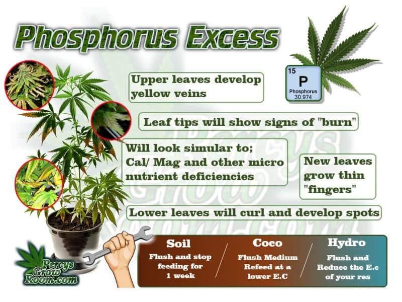 Phosphorus Excess - Percys Grow Room, A Weed Growers Forum