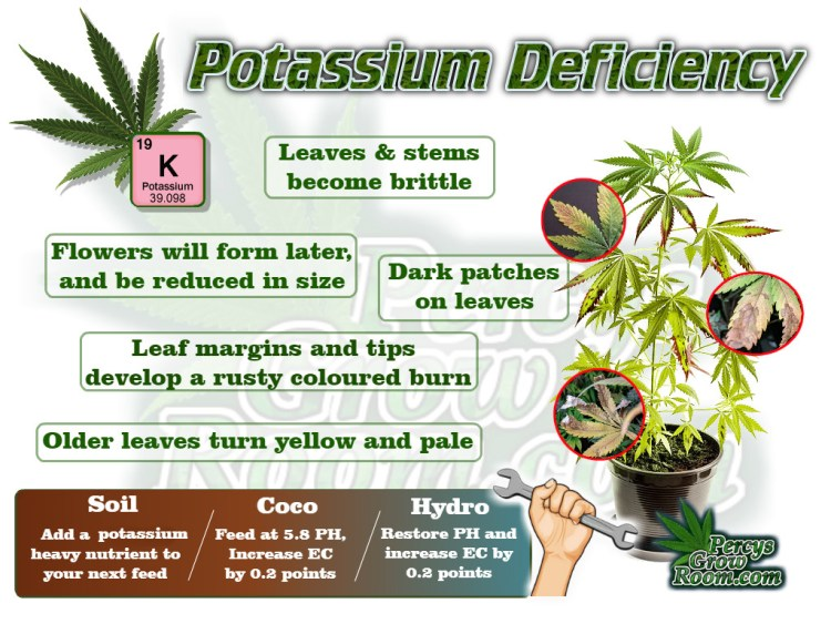 Macro and Micro Nutrients, A brief Description of Symptoms of potassium deficiency in a Cannabis Plant. Percys Grow Room.com And a Cannabis plant drawing with dark green leaves, Cannabis growers forum & community, How to grow cannabis, how to grow weed, a step by step guide to growing weed, cannabis growers forum, need help with sick plant, what's wrong with my cannabis plant, percys Grow Room, the Grow Room, percys Grow Guides, we'd growing forum, weed growers community, how to grow weed in coco, when is my cannabis plant ready for harvest, how to feed my cannabis plant, beginners guide to growing weed, how to grow weed for personal use, cannabis plant deficiency, how to germinate cannabis seeds, where to buy cannabis seeds, best weed growers website