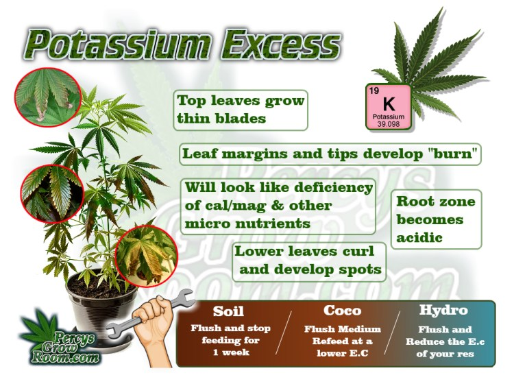 Macro and Micro Nutrients, Symptoms of potassium excess in a cannabis plant, cannabis plant deficiency, how to fix a cannabis plant deficiency, nuit burn on my cannabis plant, nuit burn on a cannabis plant, how to fix nuit burn on a cannabis plant, cannabis plant problems, how to fix a sick cannabis plant, Cannabis growers forum & community, How to grow cannabis, how to grow weed, a step by step guide to growing weed, cannabis growers forum, need help with sick plant, what's wrong with my cannabis plant, percys Grow Room, the Grow Room, percys Grow Guides, we'd growing forum, weed growers community, how to grow weed in coco, when is my cannabis plant ready for harvest, how to feed my cannabis plant, beginners guide to growing weed, how to grow weed for personal use, cannabis plant deficiency, how to germinate cannabis seeds, where to buy cannabis seeds, best weed growers website