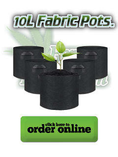 pots for growing cannabis,Cannabis growers forum & community, How to grow cannabis, how to grow weed, a step by step guide to growing weed, cannabis growers forum, need help with sick plant, what's wrong with my cannabis plant, percys Grow Room, the Grow Room, percys Grow Guides, we'd growing forum, weed growers community, how to grow weed in coco, when is my cannabis plant ready for harvest, how to feed my cannabis plant, beginners guide to growing weed, how to grow weed for personal use, cannabis plant deficiency, how to germinate cannabis seeds, where to buy cannabis seeds, best weed growers website