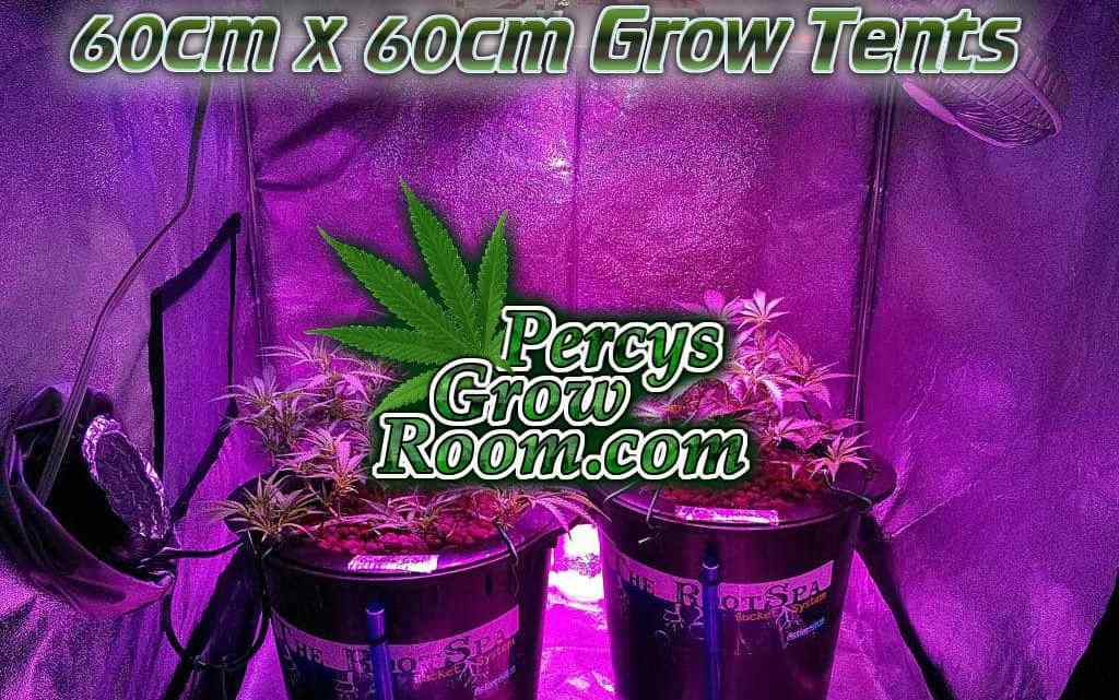 60cm x60 cm grow tents, Cannabis growers forum & community, How to grow cannabis, how to grow weed, a step by step guide to growing weed, cannabis growers forum, need help with sick plant, what's wrong with my cannabis plant, percys Grow Room, the Grow Room, percys Grow Guides, we'd growing forum, weed growers community, how to grow weed in coco, when is my cannabis plant ready for harvest, how to feed my cannabis plant, beginners guide to growing weed, how to grow weed for personal use, cannabis plant deficiency, how to germinate cannabis seeds, where to buy cannabis seeds, best weed growers website, how to dry cannabis