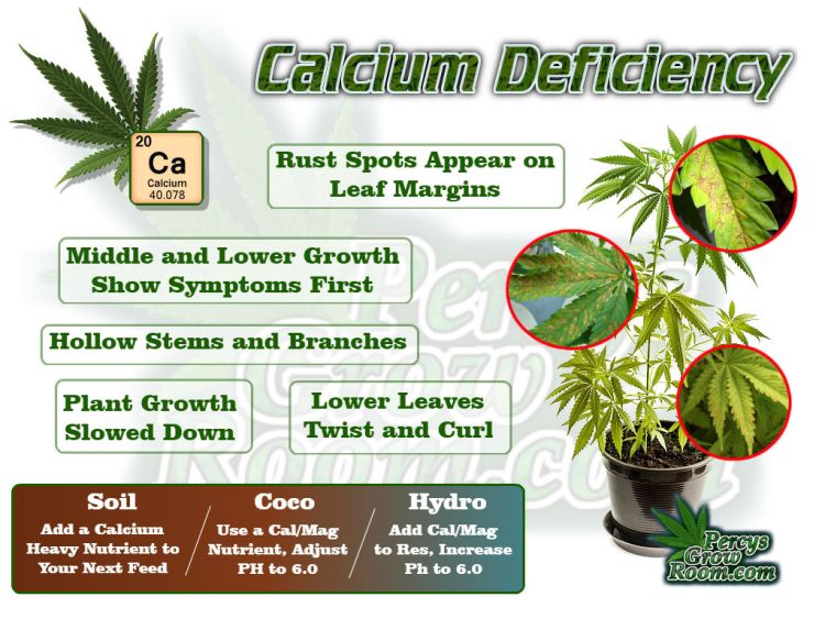 Macro and Micro Nutrients, calcium deficiency in a cannabis plan, how to fix a calcium deficiency in a cannabis plant, what does cal def look like in a cannabis plant,, Cannabis growers forum & community, How to grow cannabis, how to grow weed, a step by step guide to growing weed, cannabis growers forum, need help with sick plant, what's wrong with my cannabis plant, percys Grow Room, the Grow Room, percys Grow Guides, we'd growing forum, weed growers community, how to grow weed in coco, when is my cannabis plant ready for harvest, how to feed my cannabis plant, beginners guide to growing weed, how to grow weed for personal use, cannabis plant deficiency, how to germinate cannabis seeds, where to buy cannabis seeds, best weed growers website