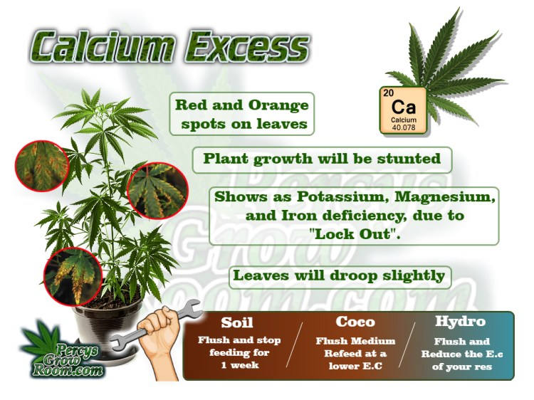calcium excess in a cannabis plant, cannabis plant deficiency, how to fix a calcium deficiency, nuit burn on my cannabis plant, nuit burn on a cannabis plant, how to fix nuit burn on a cannabis plant, cannabis plant problems, how to fix a sick cannabis plant, Cannabis growers forum & community, How to grow cannabis, how to grow weed, a step by step guide to growing weed, cannabis growers forum, need help with sick plant, what's wrong with my cannabis plant, percys Grow Room, the Grow Room, percys Grow Guides, we'd growing forum, weed growers community, how to grow weed in coco, when is my cannabis plant ready for harvest, how to feed my cannabis plant, beginners guide to growing weed, how to grow weed for personal use, cannabis plant deficiency, how to germinate cannabis seeds, where to buy cannabis seeds, best weed growers website
