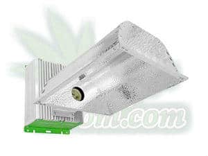 CMH lighting, CDM lighting, for growing cannabis, what is CMH, Cannabis growers forum & community, How to grow cannabis, how to grow weed, a step by step guide to growing weed, cannabis growers forum, need help with sick plant, what's wrong with my cannabis plant, percy's Grow Room, the Grow Room, Cannabis Grow Guides, weed growing forum, weed growers community, how to grow weed in coco, when is my cannabis plant ready for harvest, how to feed my cannabis plant, beginners guide to growing weed, how to grow weed for personal use, cannabis plant deficiency, how to germinate cannabis seeds, where to buy cannabis seeds, best weed growers website, Learn to grow cannabis, is it easy to grow weed,