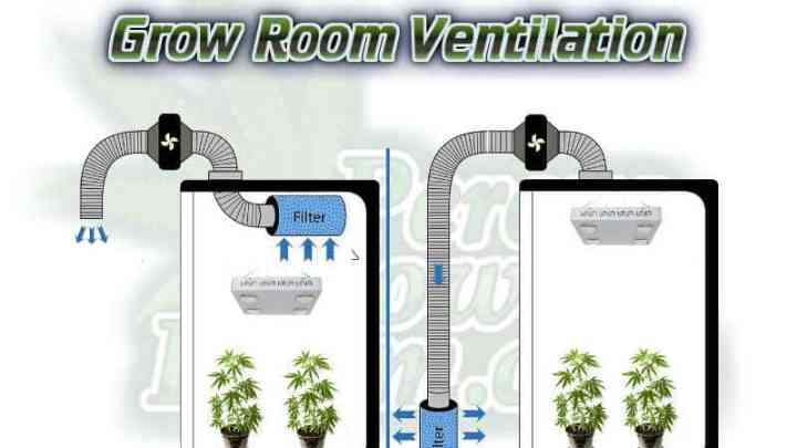 Grow room ventilation, massive grow tent, Cannabis growers forum & community, How to grow cannabis, how to grow weed, a step by step guide to growing weed, cannabis growers forum, need help with sick plant, what's wrong with my cannabis plant, percy's Grow Room, the Grow Room, Cannabis Grow Guides, weed growing forum, weed growers community, how to grow weed in coco, when is my cannabis plant ready for harvest, how to feed my cannabis plant, beginners guide to growing weed, how to grow weed for personal use, cannabis plant deficiency, how to germinate cannabis seeds, where to buy cannabis seeds, best weed growers website, Learn to grow cannabis, is it easy to grow weed, grow room extraction, Cannabis Growers forum, weed growers forum, How to grow legal cannabis, a step by step guide to growing weed, cannabis growing guide, tips for marijuana growers, growing cannabis plants for the first time, marijuana growers forum, marijuana growing tips, cannabis plant problems, cannabis plant help, marijuana growing expert advice