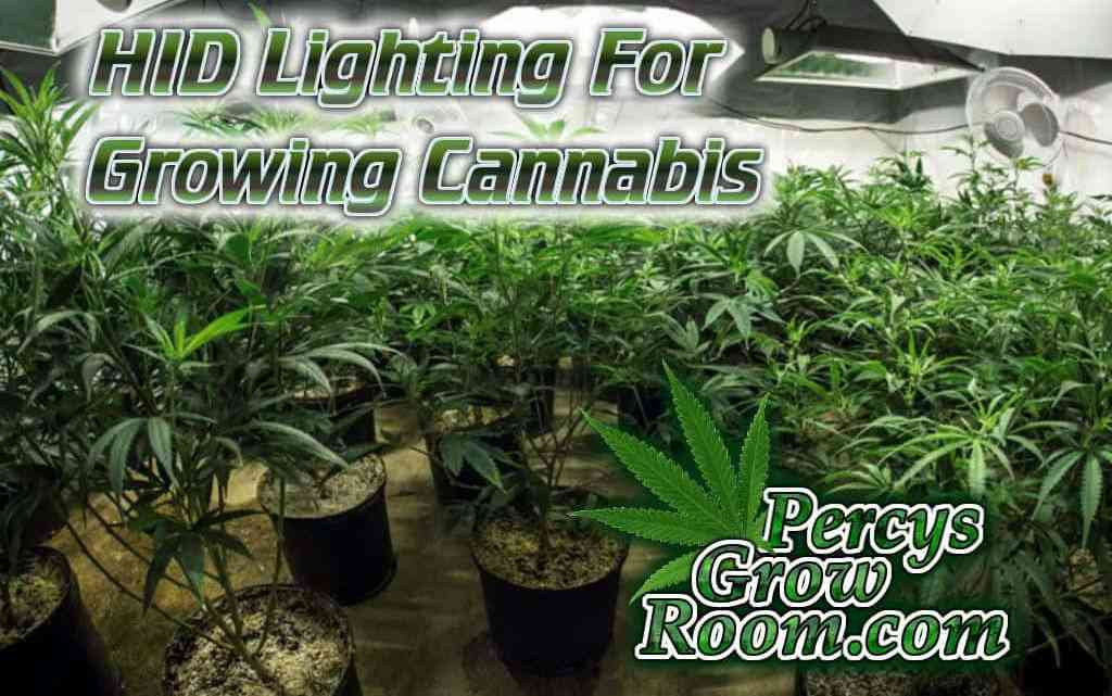 HID Lighting for Growing Cannabis - Percys Grow Room