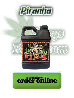 advanced nutrients piranha, Cannabis growers forum & community, How to grow cannabis, how to grow weed, a step by step guide to growing weed, cannabis growers forum, need help with sick plant, what's wrong with my cannabis plant, percy's Grow Room, the Grow Room, Cannabis Grow Guides, weed growing forum, weed growers community, how to grow weed in coco, when is my cannabis plant ready for harvest, how to feed my cannabis plant, beginners guide to growing weed, how to grow weed for personal use, cannabis plant deficiency, how to germinate cannabis seeds, where to buy cannabis seeds, best weed growers website, Learn to grow cannabis, is it easy to grow weed