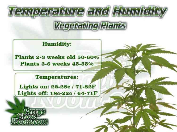 Temperature and humidity for vegging cannabis plant, Cannabis growers forum & community, How to grow cannabis, how to grow weed, a step by step guide to growing weed, cannabis growers forum, need help with sick plant, what's wrong with my cannabis plant, percys Grow Room, the Grow Room, percys Grow Guides, we'd growing forum, weed growers community, how to grow weed in coco, when is my cannabis plant ready for harvest, how to feed my cannabis plant, beginners guide to growing weed, how to grow weed for personal use, cannabis plant deficiency, how to germinate cannabis seeds, where to buy cannabis seeds, best weed growers website